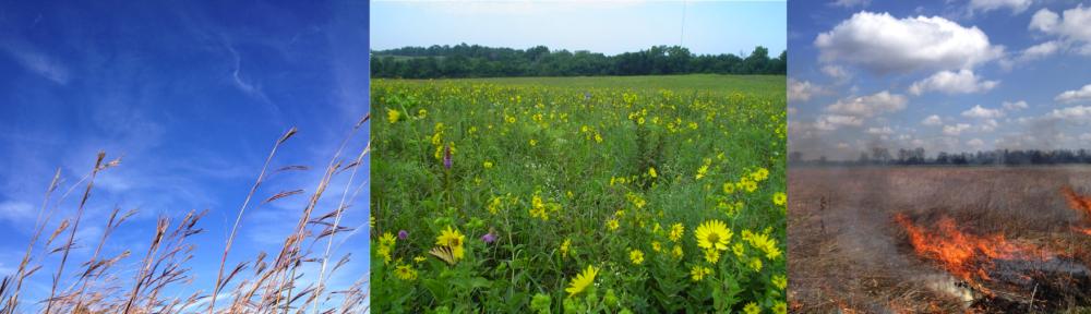 Grassland Ecology Lab